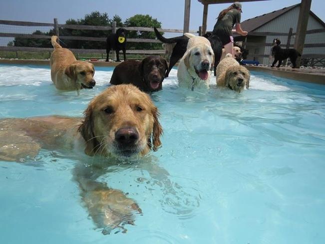 v deo mostra cachorros se divertindo  o nunca em festa na piscina
